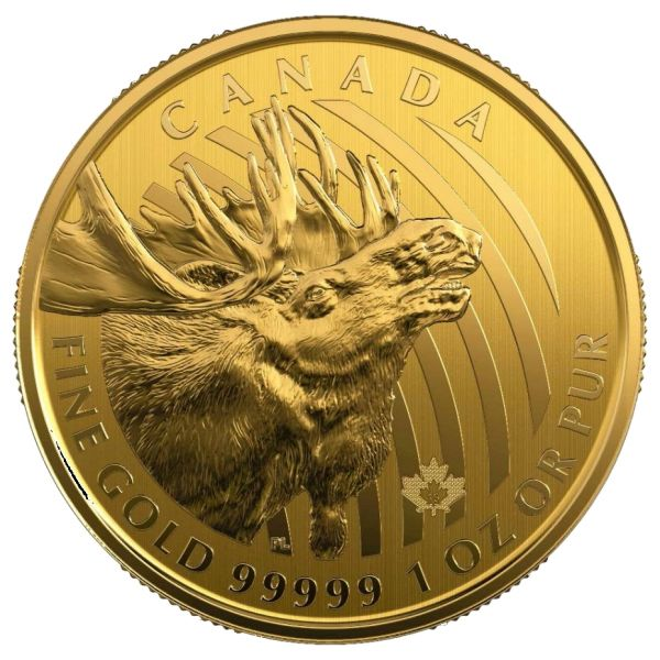 Elch 2019 1oz Goldmünze Ruf der Wildnis Call of the Wild Moose Canada Kanda